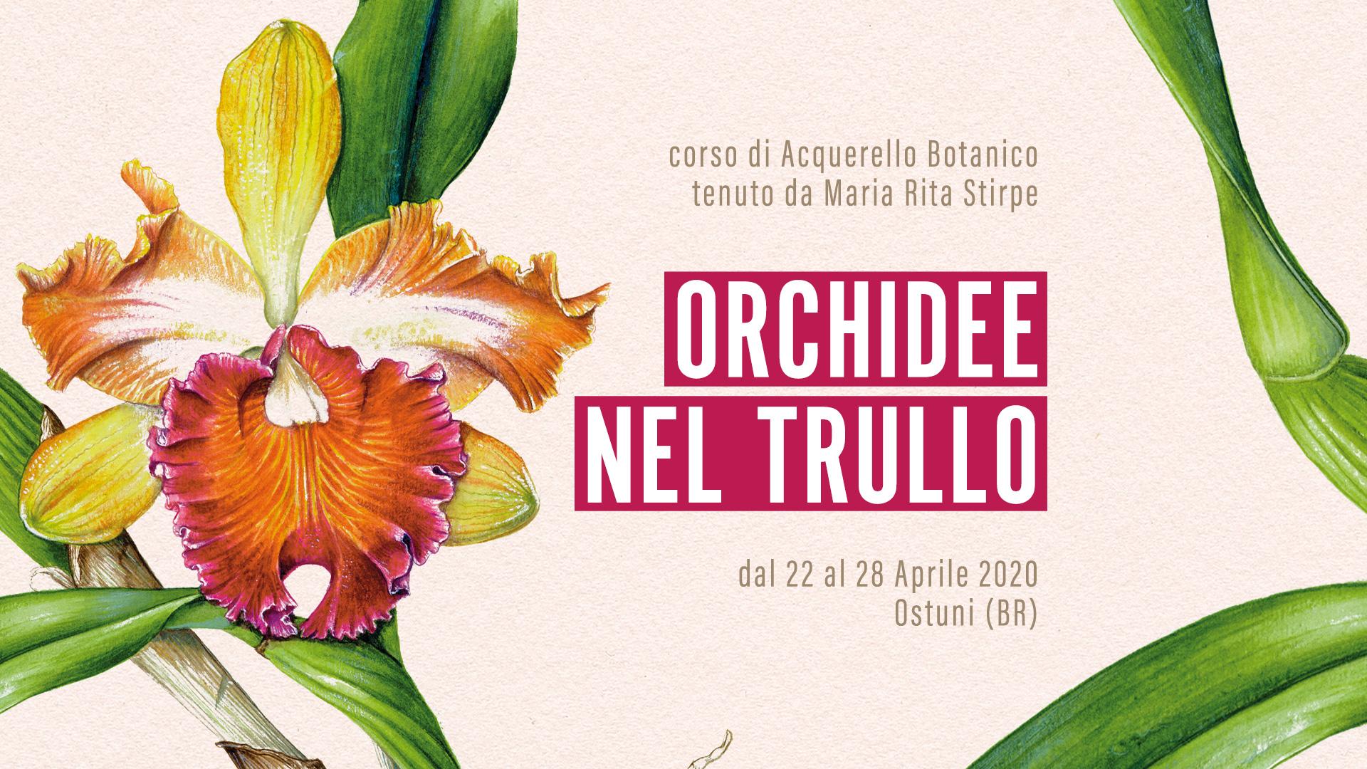 Orchidee nel Trullo - Ostuni