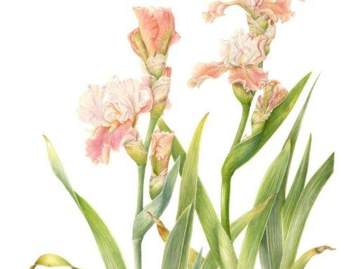 Iris Giardino Rea