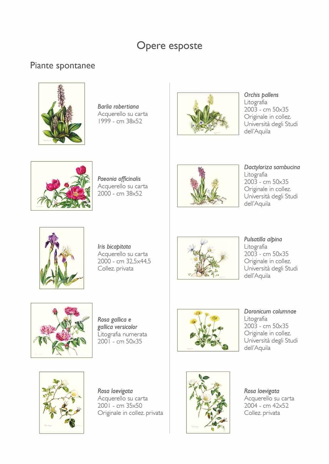 Catalogo - Ars Botanica - Pagina Interna 01