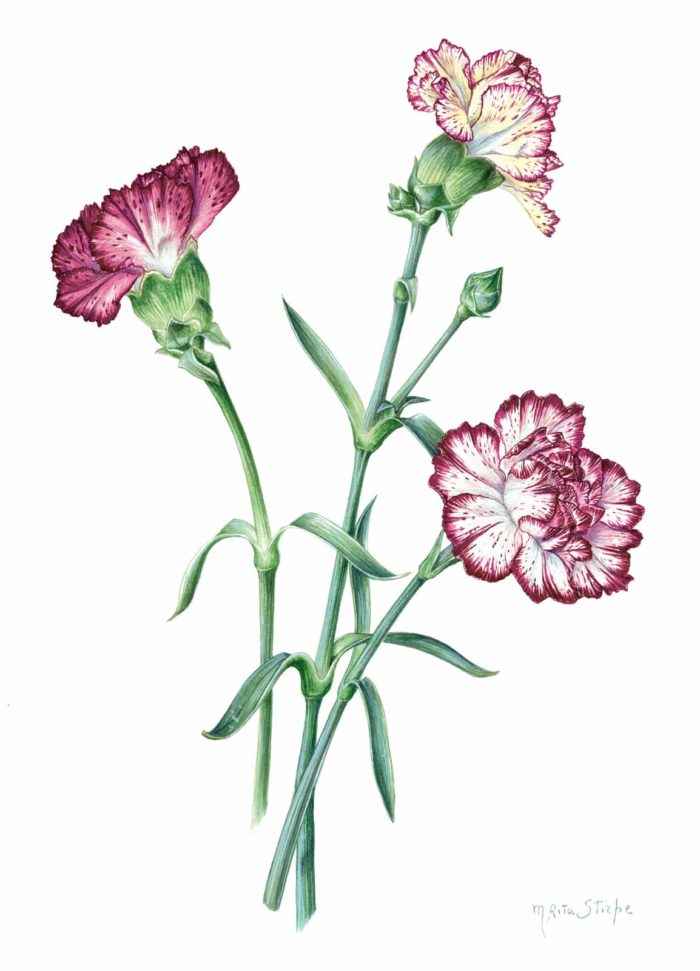 Catalogo - Ars Botanica - Stampa 01