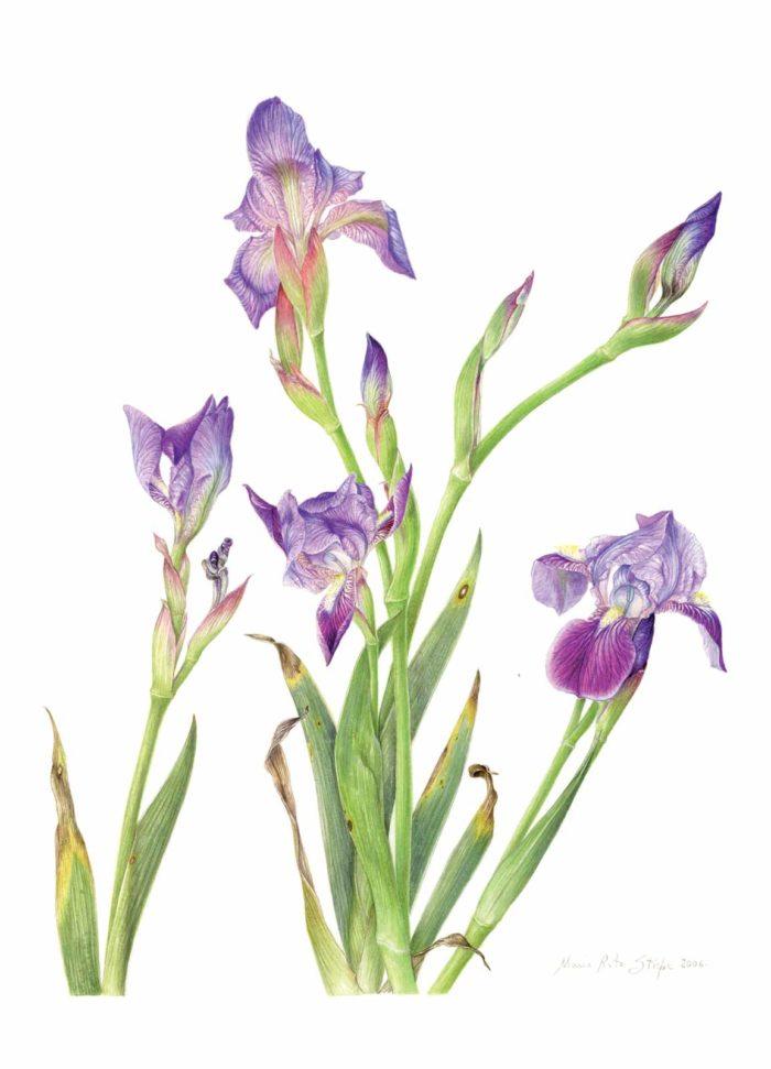 Catalogo - Ars Botanica - Stampa 02
