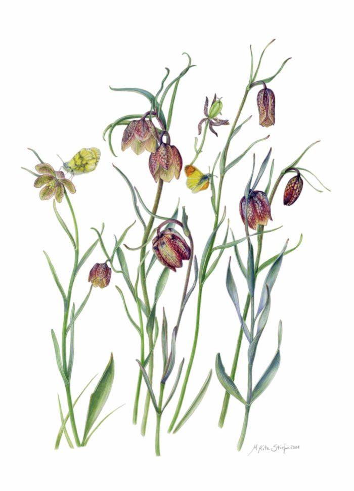 Catalogo - Ars Botanica - Stampa 03