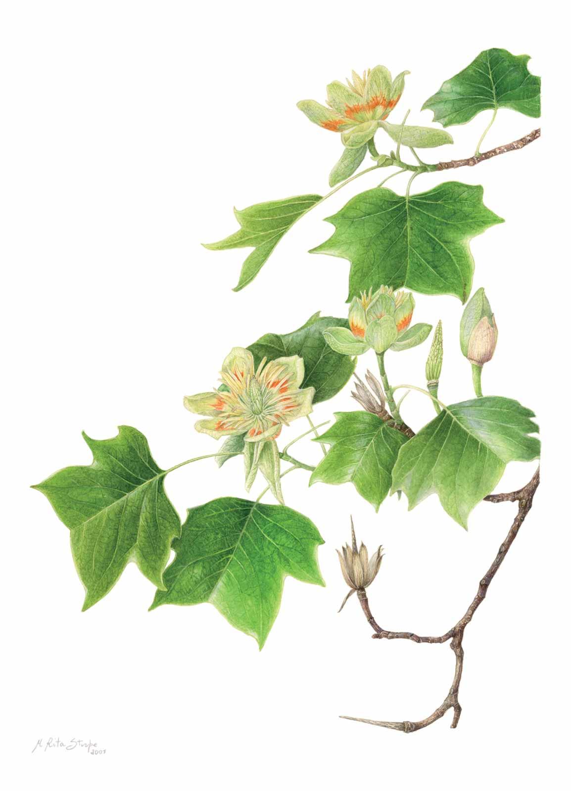 Catalogo - Ars Botanica - Stampa 04