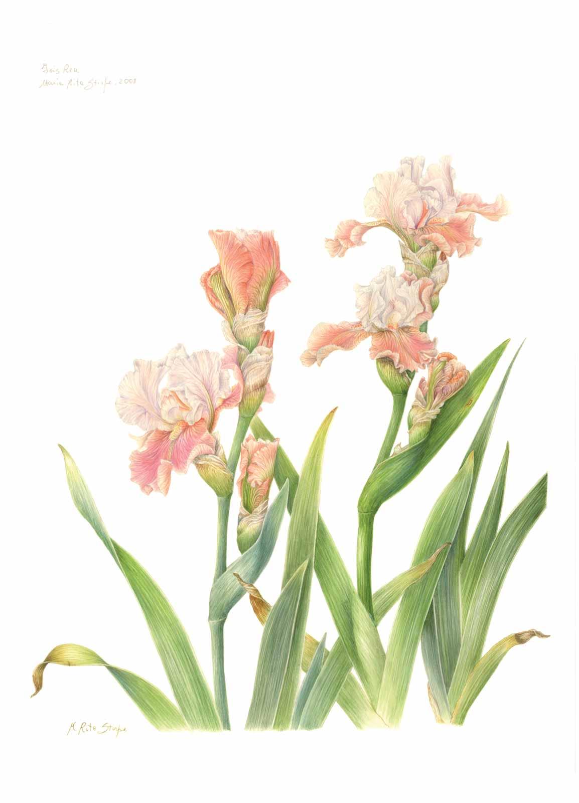 Catalogo - Ars Botanica - Stampa 06