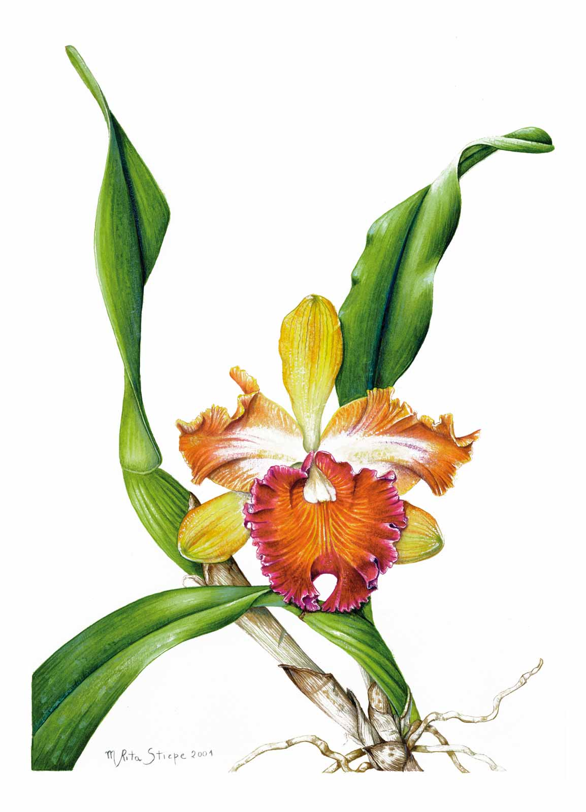 Catalogo - Ars Botanica - Stampa 07
