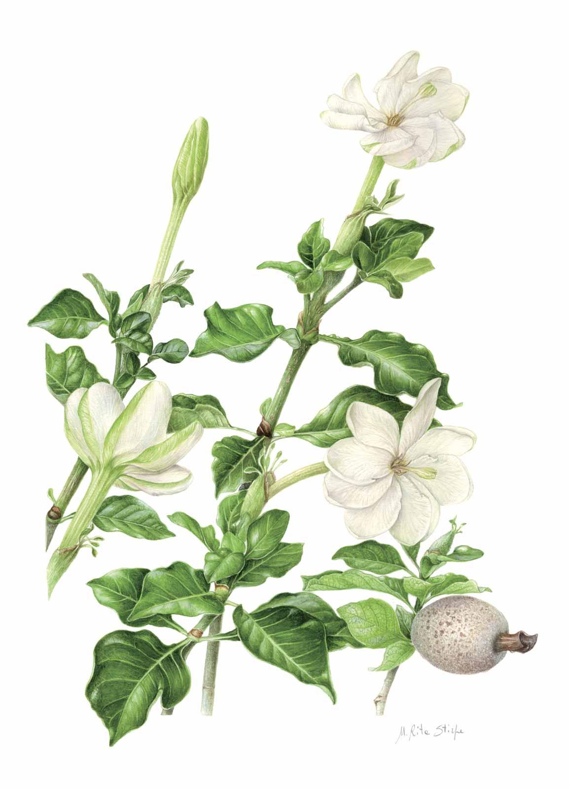 Catalogo - Ars Botanica - Stampa 08