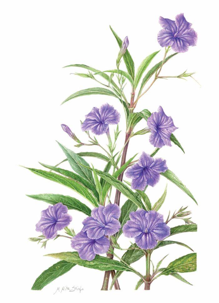 Catalogo - Ars Botanica - Stampa 09