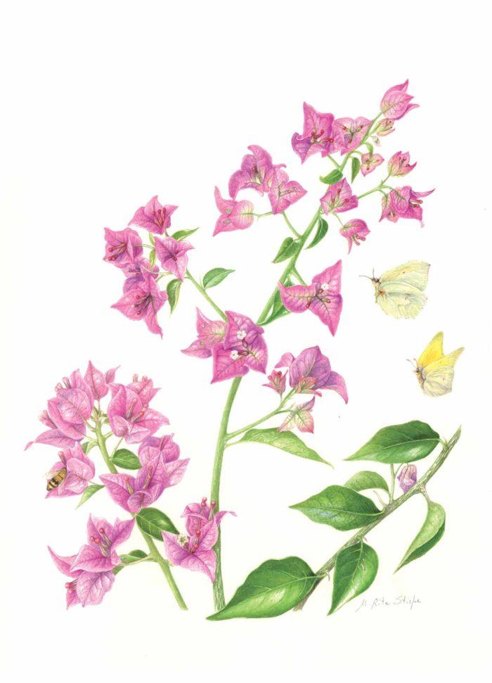 Catalogo - Ars Botanica - Stampa 10