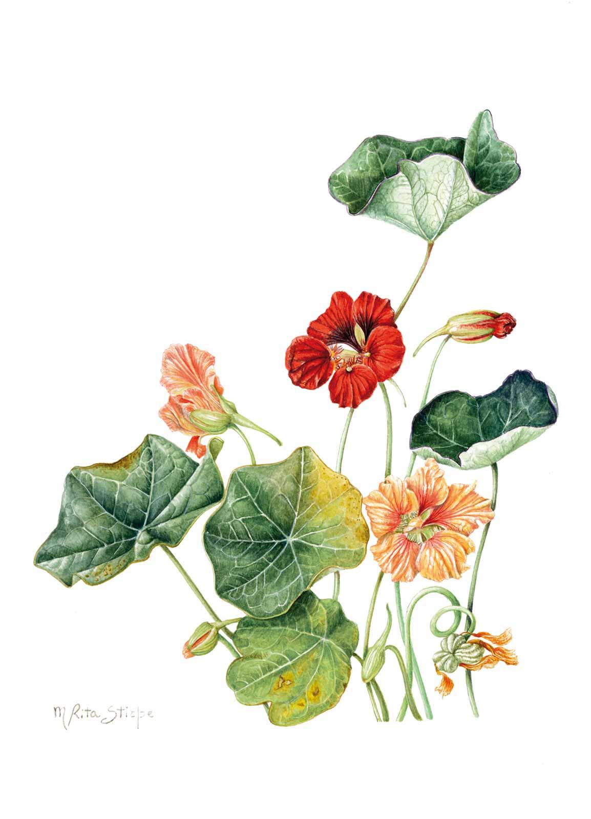 Catalogo - Ars Botanica - Stampa 11