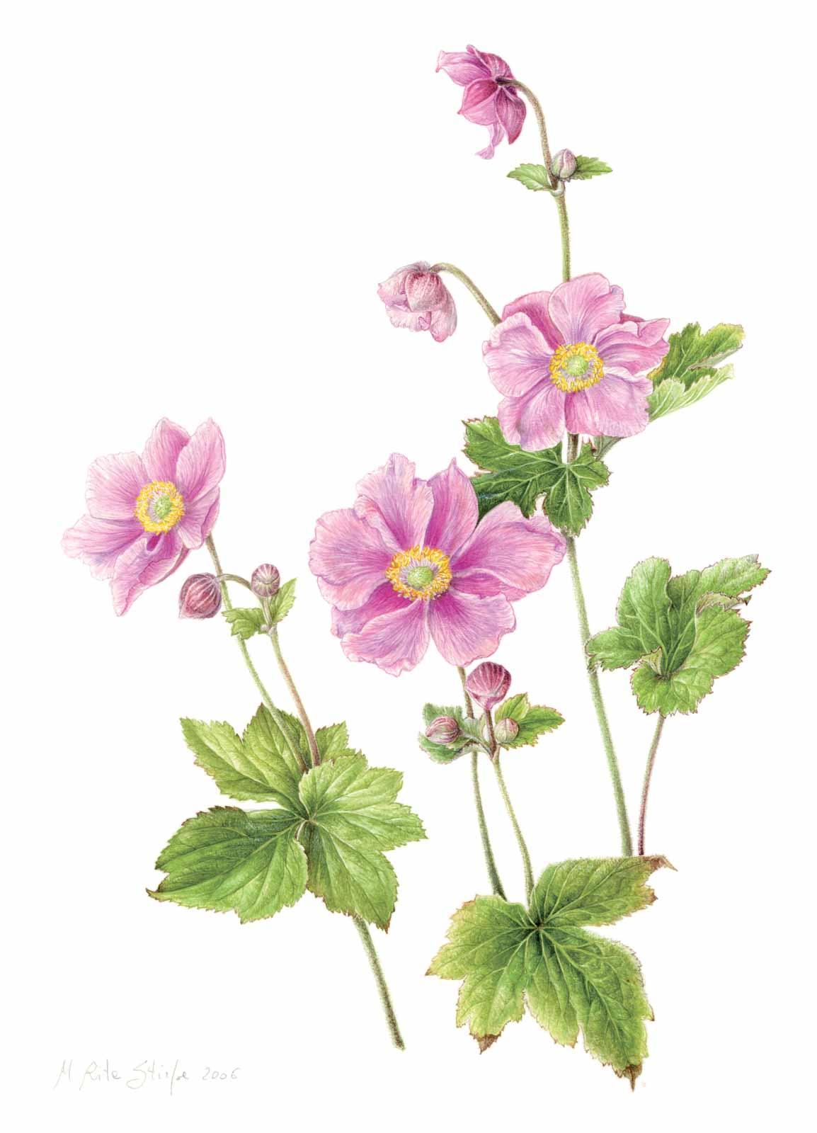 Catalogo - Ars Botanica - Stampa 13