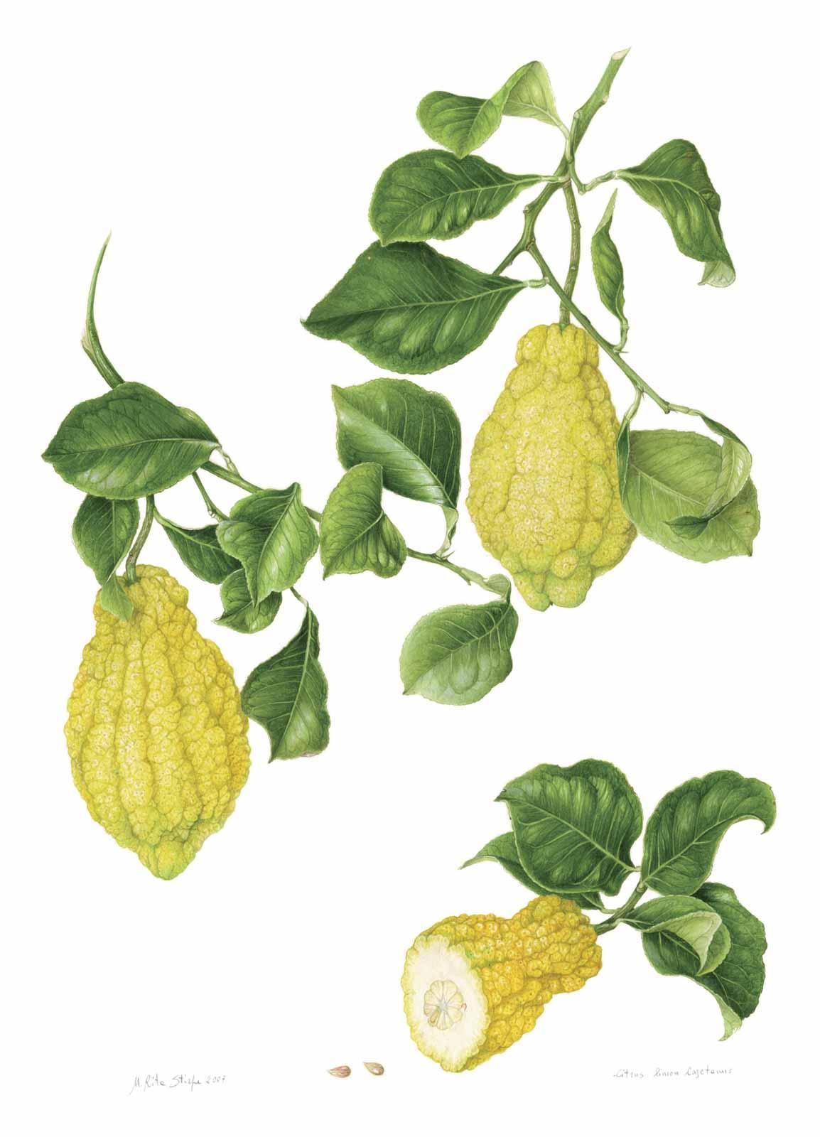 Catalogo - Ars Botanica - Stampa 16