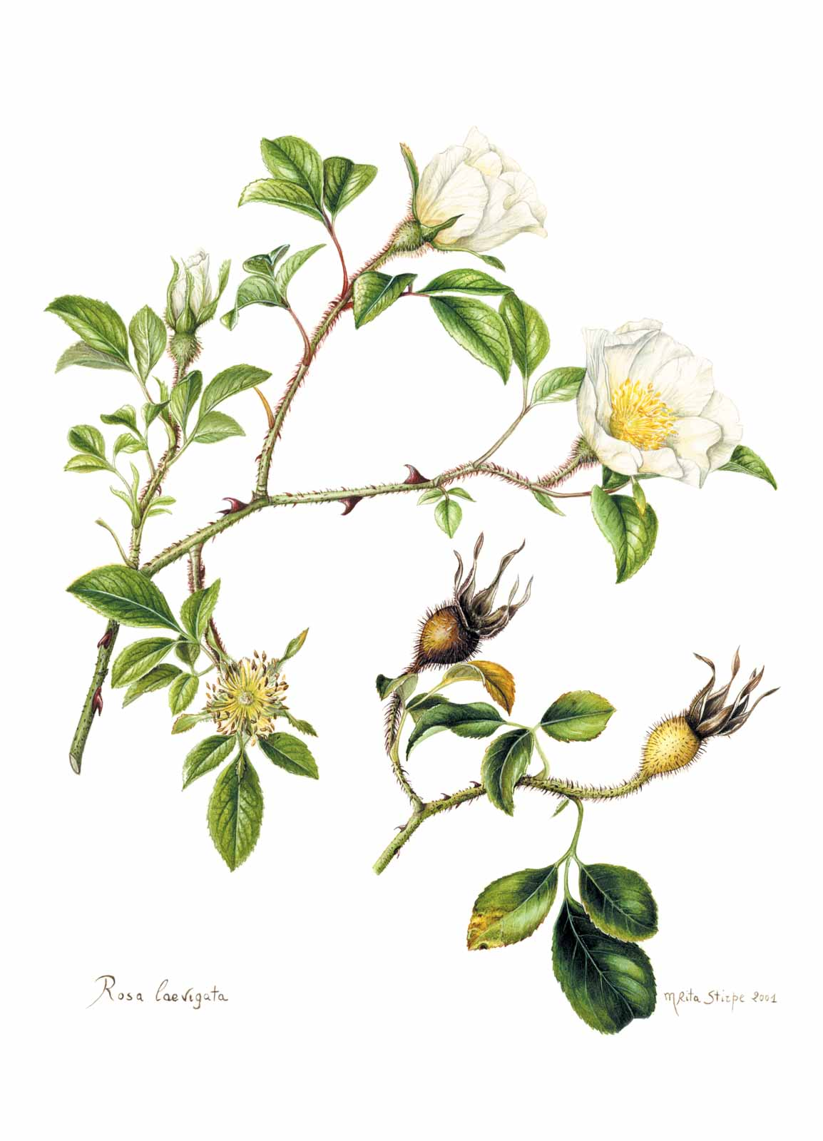 Catalogo - Ars Botanica - Stampa 17