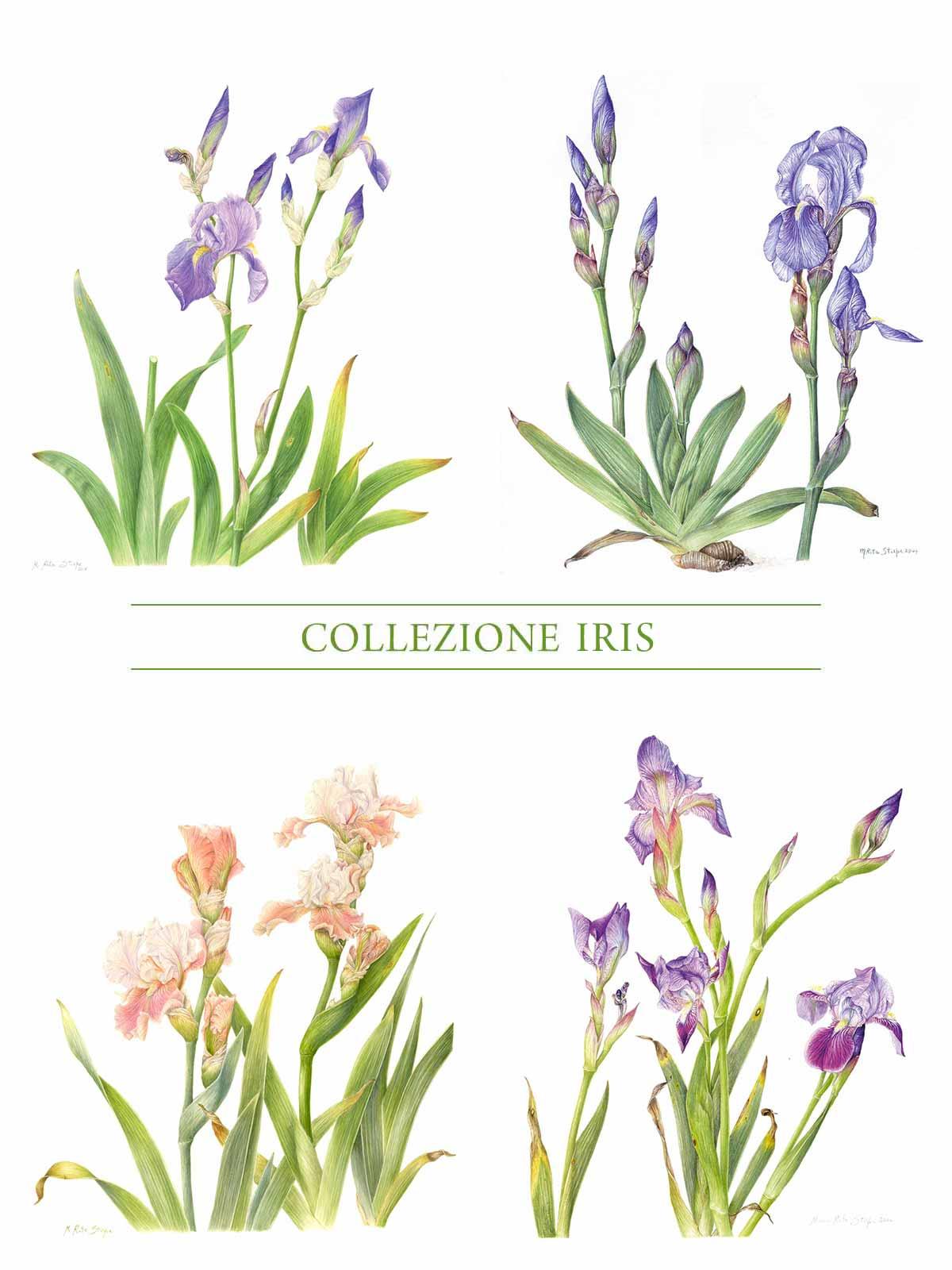 Stampa - Collezione Iris - Completa