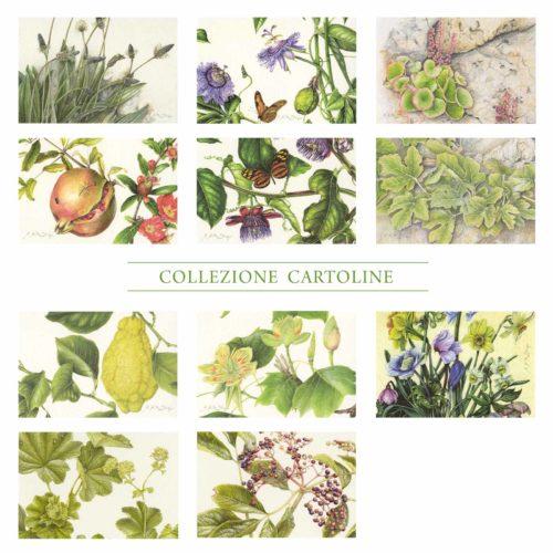 Cartoline - Collezione