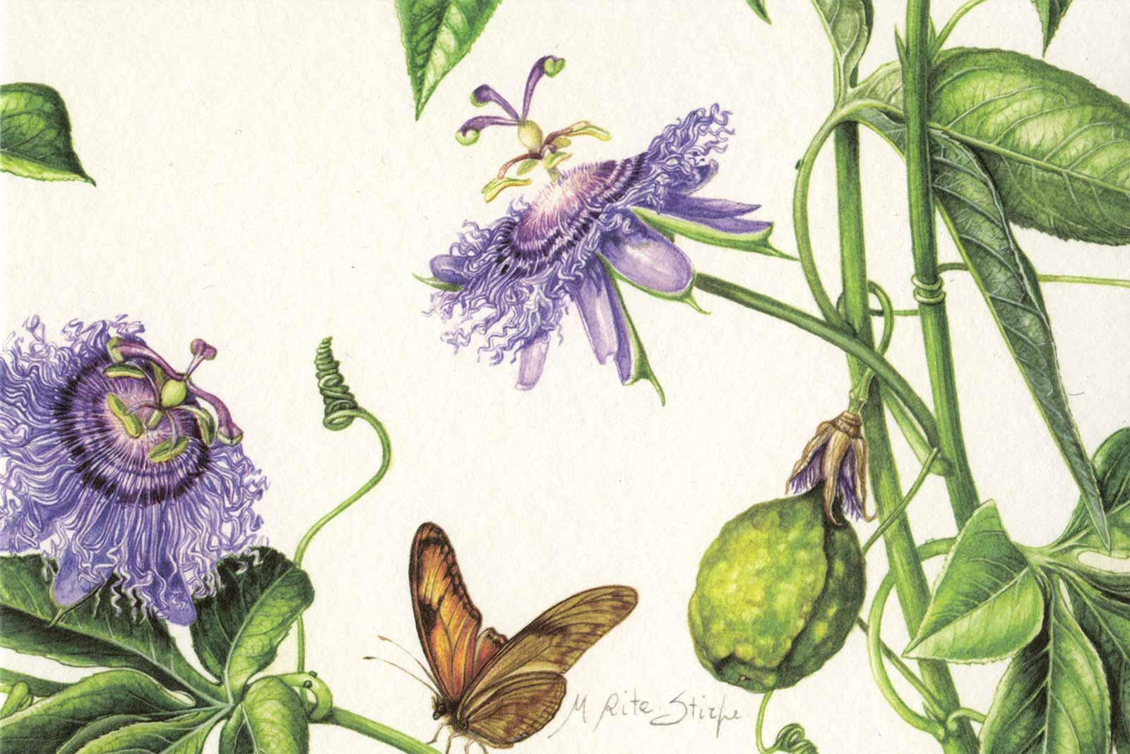 Cartoline - Passiflora incense