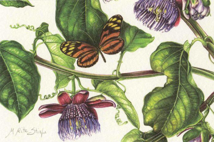 Cartoline - Passiflora alata