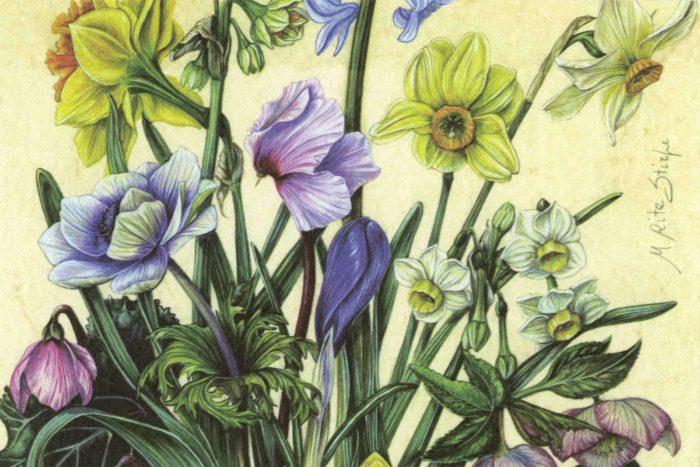 Cartoline - Primavera
